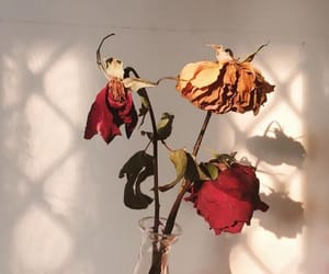 flowers, rose, and article image