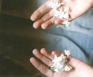 flowers, hands, and white image