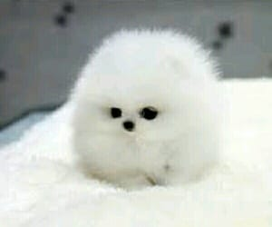 dog, fluffy, and small image