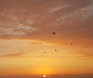 sunset, sky, and birds image