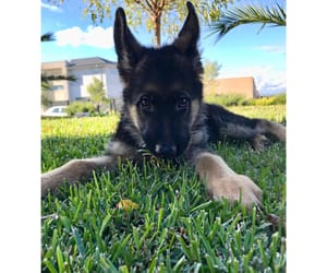 boy, gsd, and love image