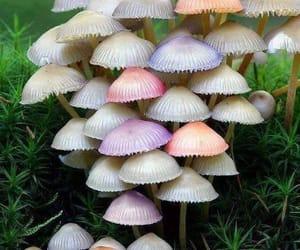 mushroom, nature, and pastel image