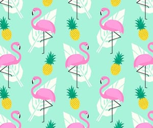 background, colorful, and flamingo image