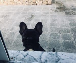 dog and babydog image