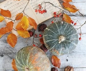 autumn, colors, and pumpkins image