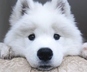animal, animals, and cute animal image