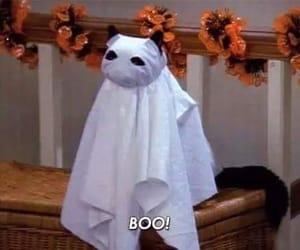 cat, Halloween, and salem image