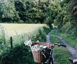 nature, flowers, and bike image