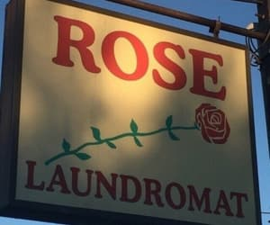 rose, red, and vintage image