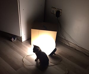 black, night, and cat image