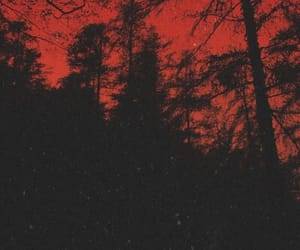 dark, forest, and red image