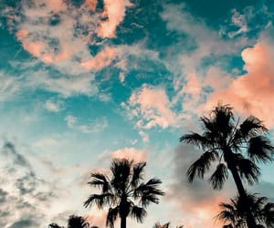 wallpaper, sunset, and palm trees image