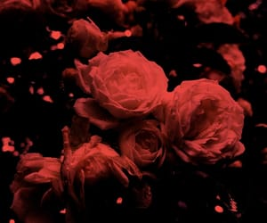 aesthetic, blossom, and dark image