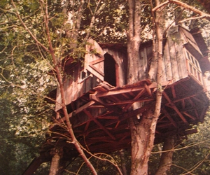 tree house and casa da arvore image
