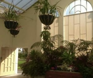 aesthetic, hanging plants, and arch image