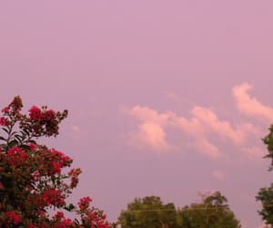 sky, flowers, and pink image