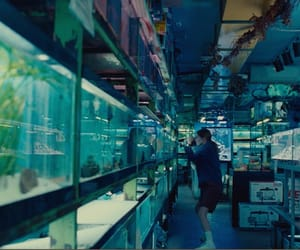 aquarium, movie, and short film image