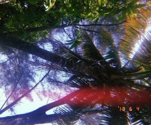 beach, camera, and palmeras image