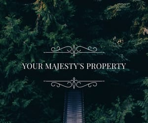 cool, majesty, and wallpaper image