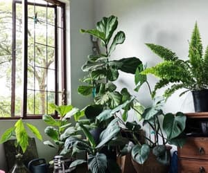article, gardening, and houseplants image