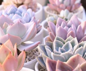 pastel, succulents, and pink image