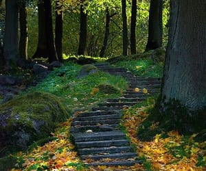 ukraine, forest, and path image