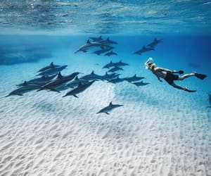 blue, diving, and nature image