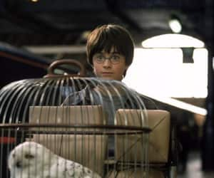 daniel radcliffe, harry potter, and hedwig image
