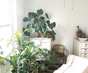 home, simple, and plant image