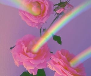 rainbow, rose, and flowers image