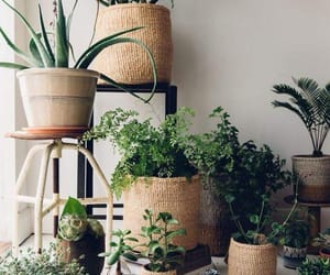 green, inspiration, and plants image