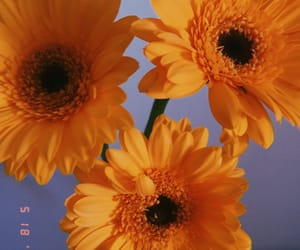 flowers, retro, and yellow image