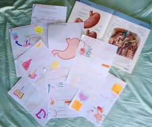 anatomia, anatomy, and book image