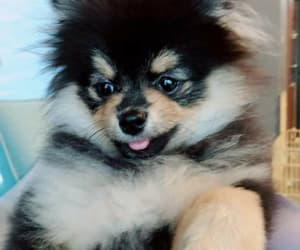 bts, v, and yeontan image