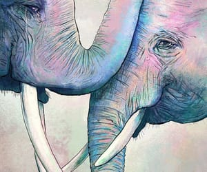 elephant, animals, and colors image