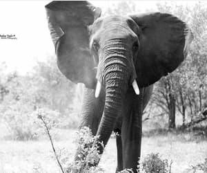 elefantes image