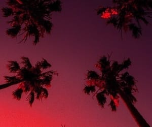 sky, wallpaper, and palm trees image