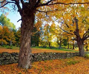 landscape, view, and autumn leaves image