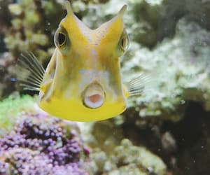 cheese, cowfish, and taylor nicole dean image