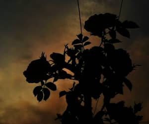 shadow, clouds, and roses image