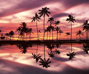 sunset, beach, and pink image