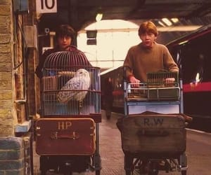 harry potter, rony weasley, and friends image