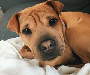 animals, dog, and doggie image