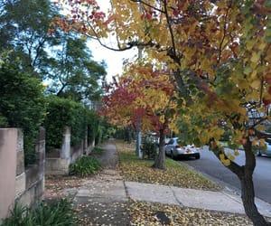 australia, beauty, and life image