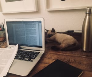 animal, cat, and desk image