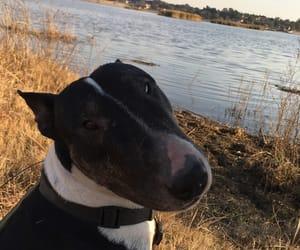 animals, dog, and photography image