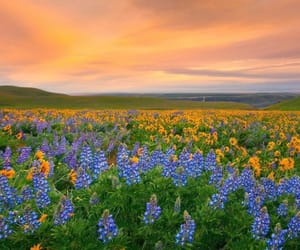 countryside, sunset, and flowers image
