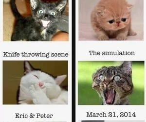 divergent and cat image