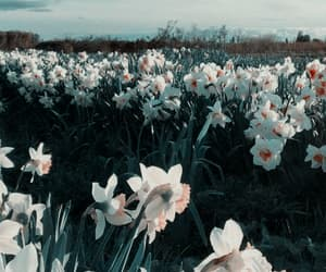 aesthetic, flowers, and lockscreen image