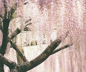 beautiful, flower, and fuji image